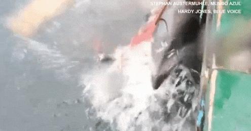 Rồi kéo từng con lên thuyền.