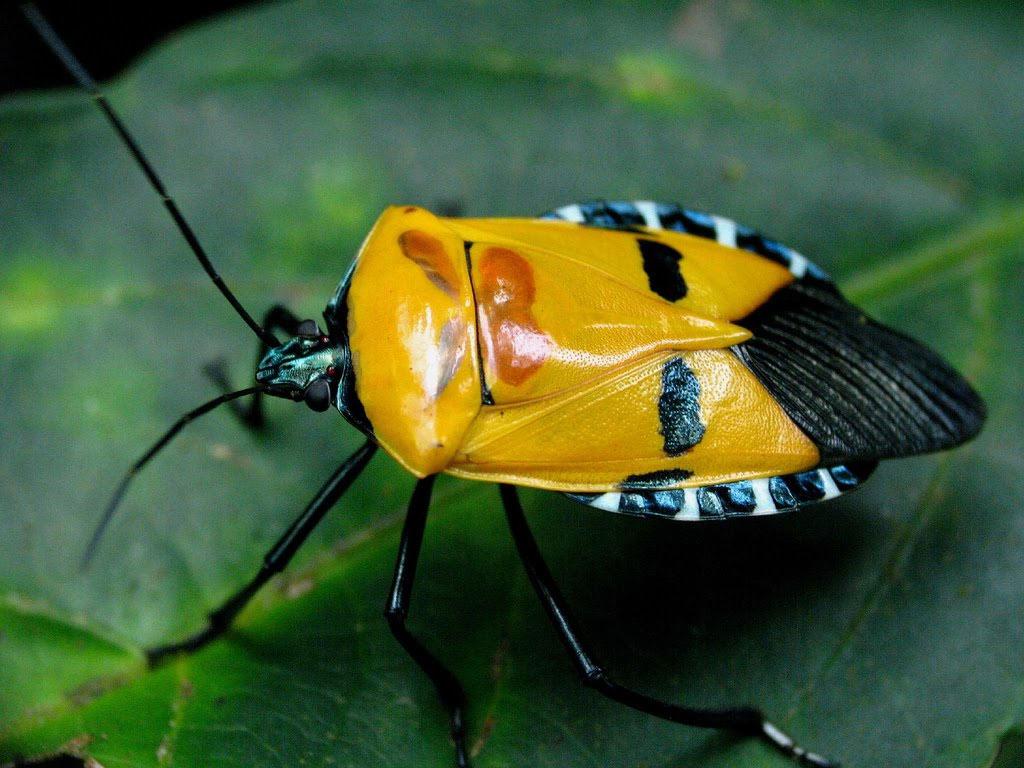 Điều thú vị nhất của loài vật này là dưới góc độ khác nhau, chúng sẽ tạo cho người quan sát những hình dung khác nhau.