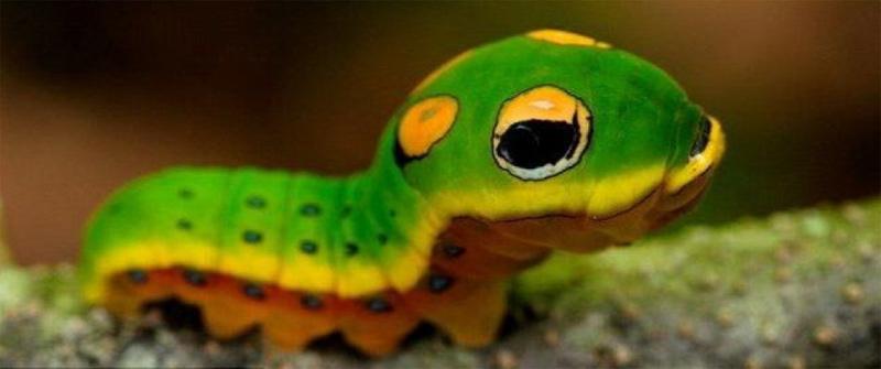 """Chính điểm này khiến chúng trông y như những """"con rắn tí hon"""" vô cùng đáng yêu."""