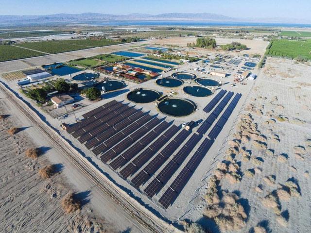 Trang trại nuôi cá trên sa mạc