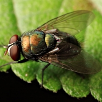 10 cách đơn giản để đuổi ruồi ra khỏi nhà
