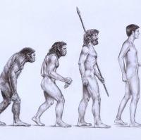 Xem bằng chứng tiến hóa trên chính cơ thể bạn