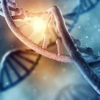 Phát hiện bộ gen người có chứa ADN của virus cổ đại