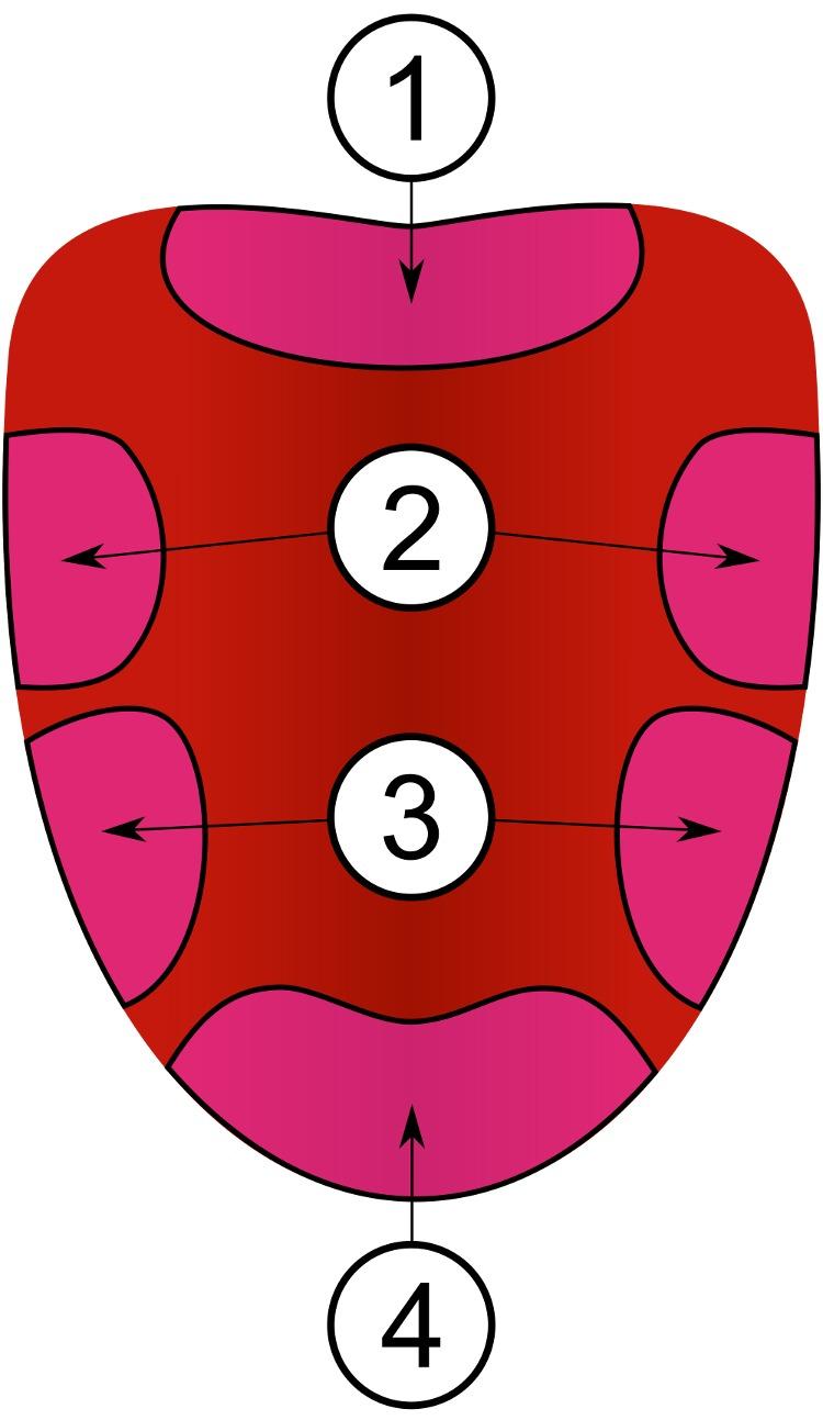 Bốn vị trí 1, 2, 3 và 4 thực tế không khác biệt trong chức năng vị giác.