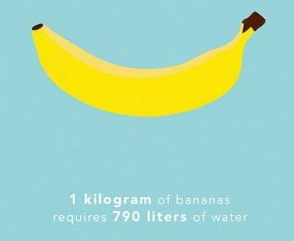 Cần 790 lít nước để sản xuất ra 1 kg chuối.