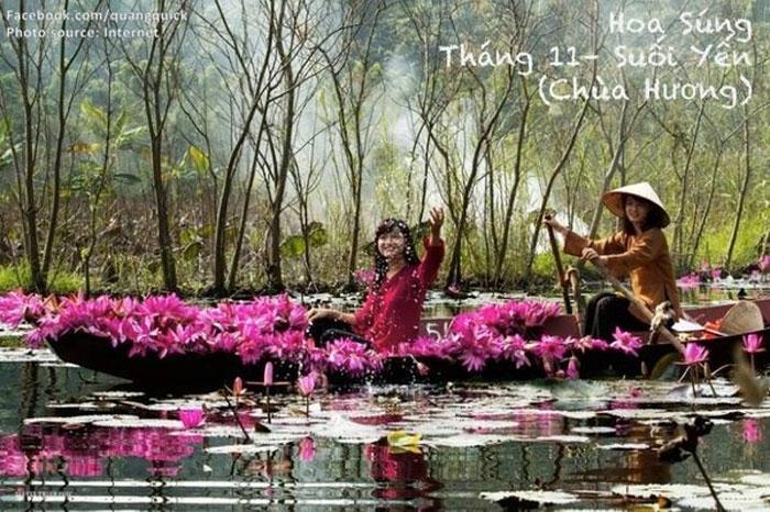 Hoa súng - Chùa Hương