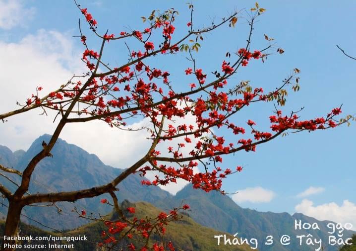 Tháng 3 còn là mùa của hoa gạo nở đỏ rực.