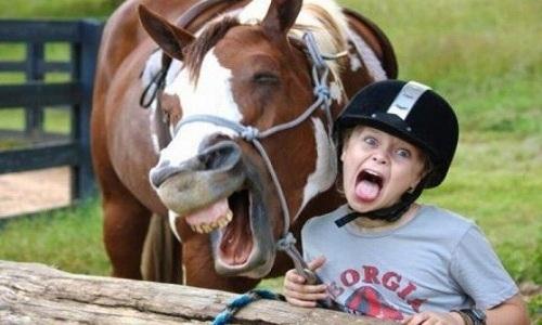 Ngựa biết phân biệt giữa gương mặt giận dữ và vui vẻ.