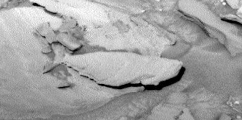 Con cá hóa thạch khổng lồ là điều kỳ lạ trong bức ảnh được chụp bởi NASA.