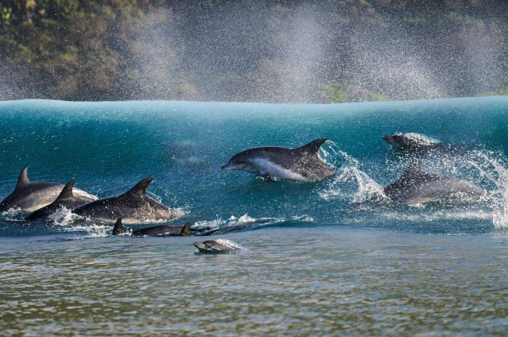 Những chú cá heo đang cưỡi sóng đã đem về cho Geo Cloete - Nhiếp ảnh gia Nam Phi giải vàng trong hạng mục: Ảnh chụp trên mặt nước.