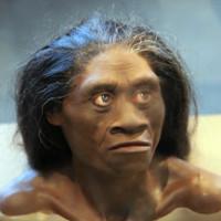 Người lùn cổ đại Indonesia bị tổ tiên loài người xóa sổ?