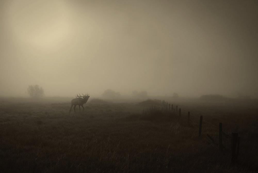 Buổi sáng trên đồng cỏ ở Billings, Montana.