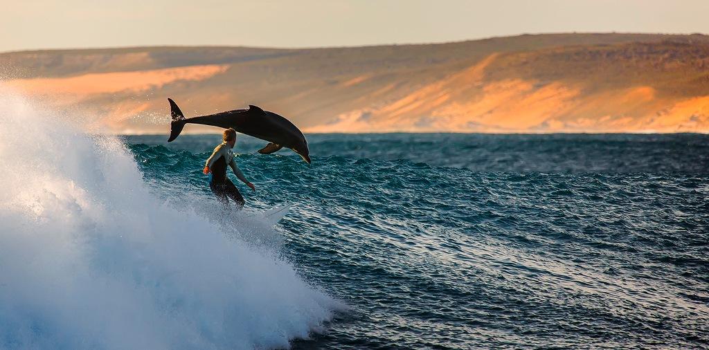 Lướt sóng với cá heo ở Kalbarri, Australia.