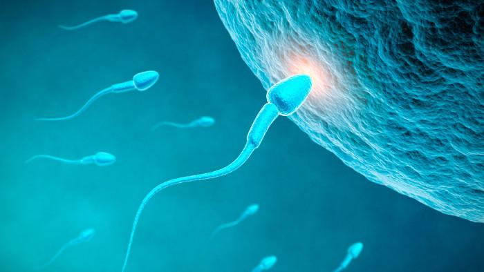 """Nếu hormone progesterone không kích hoạt """"đuôi"""" của tinh trùng, việc thụ tinh sẽ không diễn ra."""