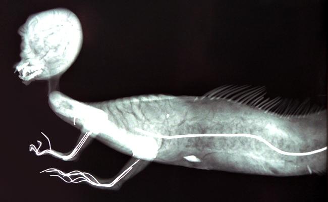 """FeeJee còn được gọi là """"cá khỉ"""" bởi xác ướp kỳ quái này có thân trên là của khỉ, nửa mình dưới là của cá."""