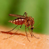 Việt Nam phát hiện 2 ca nhiễm virus Zika đầu tiên