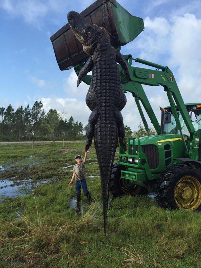 Nín thở với con cá sấu khổng lồ.