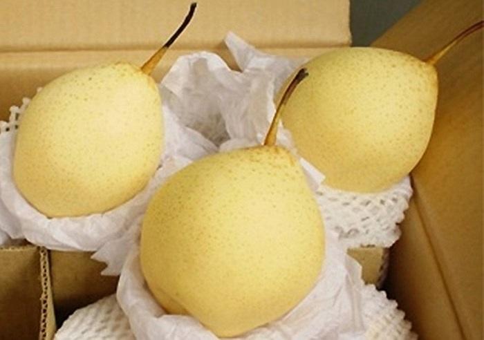 Lê Trung Quốc thường to tròn, bóng đẹp, có màu xanh hoặc vàng tươi, quả đồng đều rất bắt mắt.