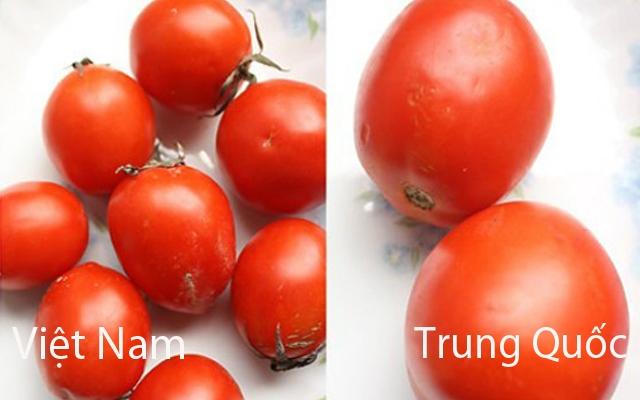 Cà chua Trung Quốc vỏ ngoài bóng, to và không có cuống.