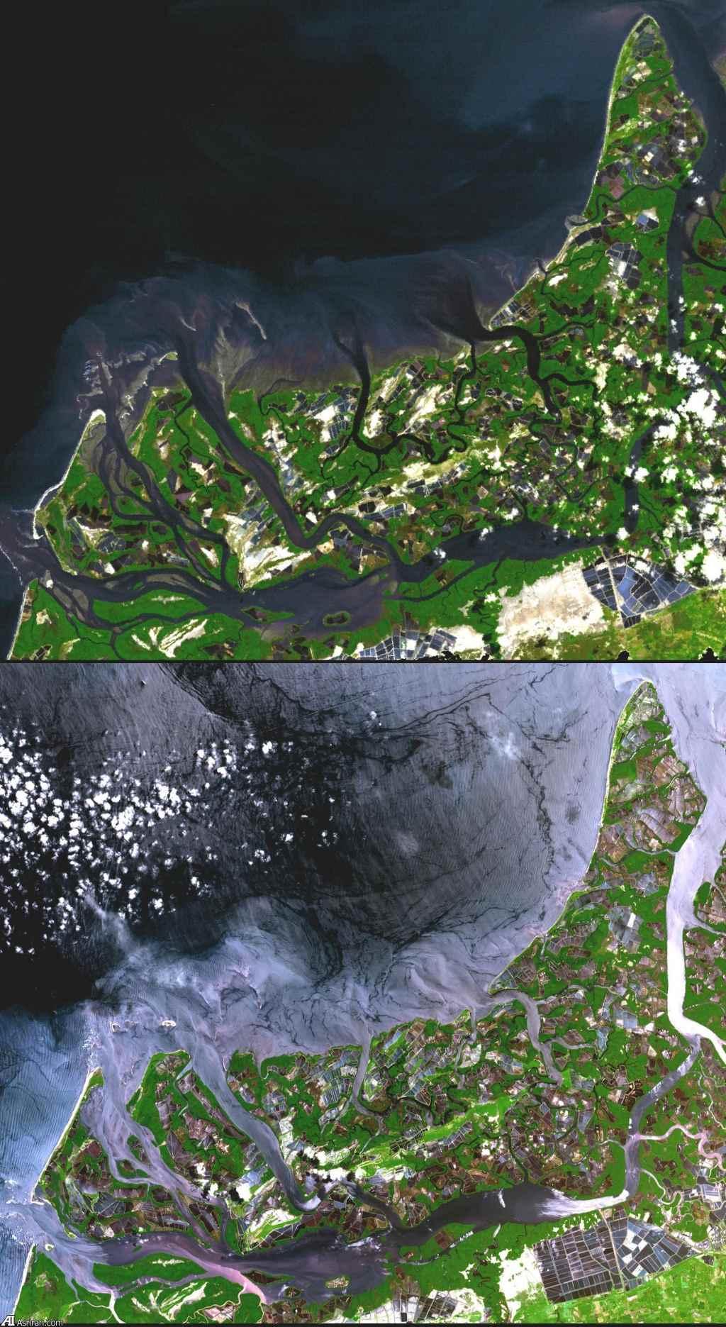Vùng đầm lầy của Ecuador năm 1991 (ảnh trên) chuyển thành trang trại nuôi tôm năm 2001 (ảnh dưới).