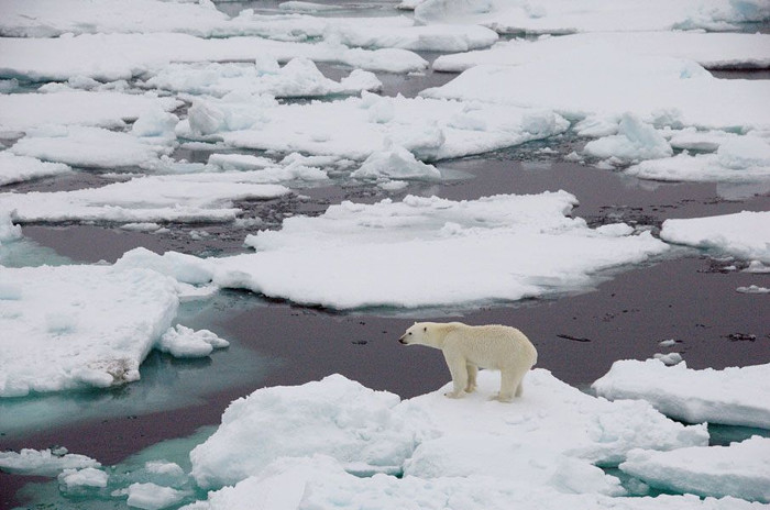 Sự ấm lên của đại dương ngăn chặn băng biển mở rộng về phía Nam.