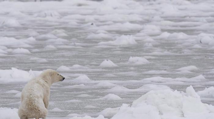 Băng biển Bắc Cực đóng vai trò quan trọng điều hòa nhiệt độ bề mặt Trái Đất.