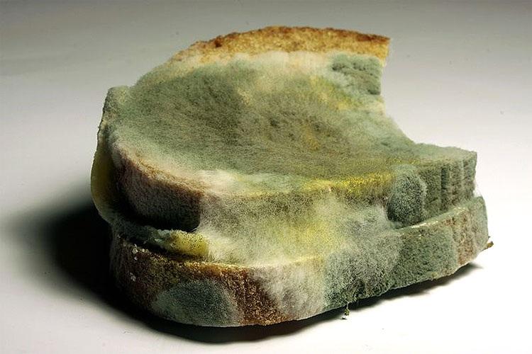 Hạn sử dụng ghi trên bao bì không phải là hạn thực phẩm sẽ bị hư hỏng.