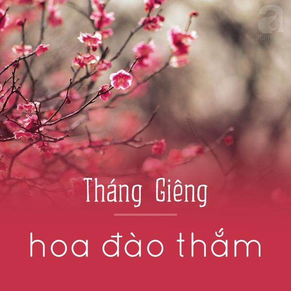 Tháng giêng - Hoa đào thắm