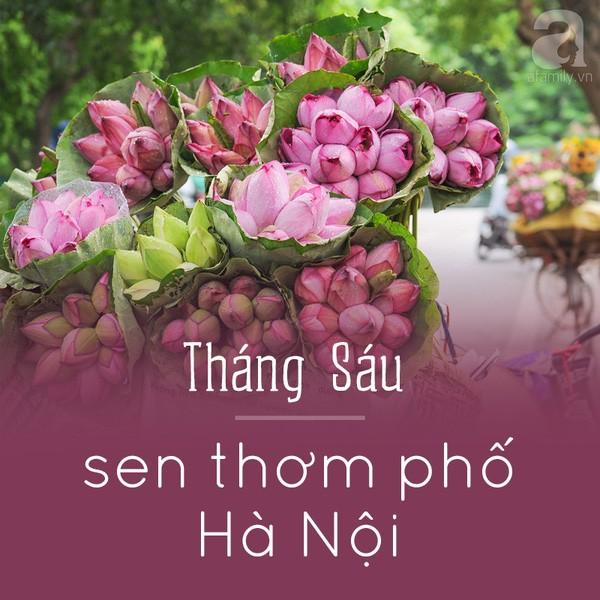 Tháng sau - Sen thơm phố Hà Nội