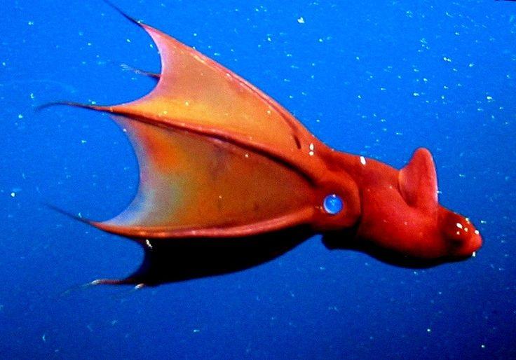 """Cơ thể của mực """"ma cà rồng"""" mềm và sền sệt như sứa hơn là mực."""