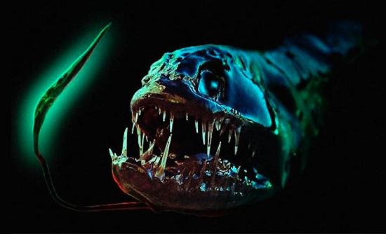Cá rồng (Dragonfish)