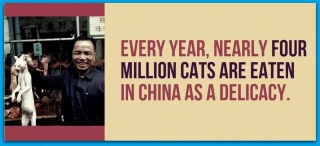 Mỗi năm, gần bốn triệu con mèo được ăn ở Trung Quốc như là một món ăn.