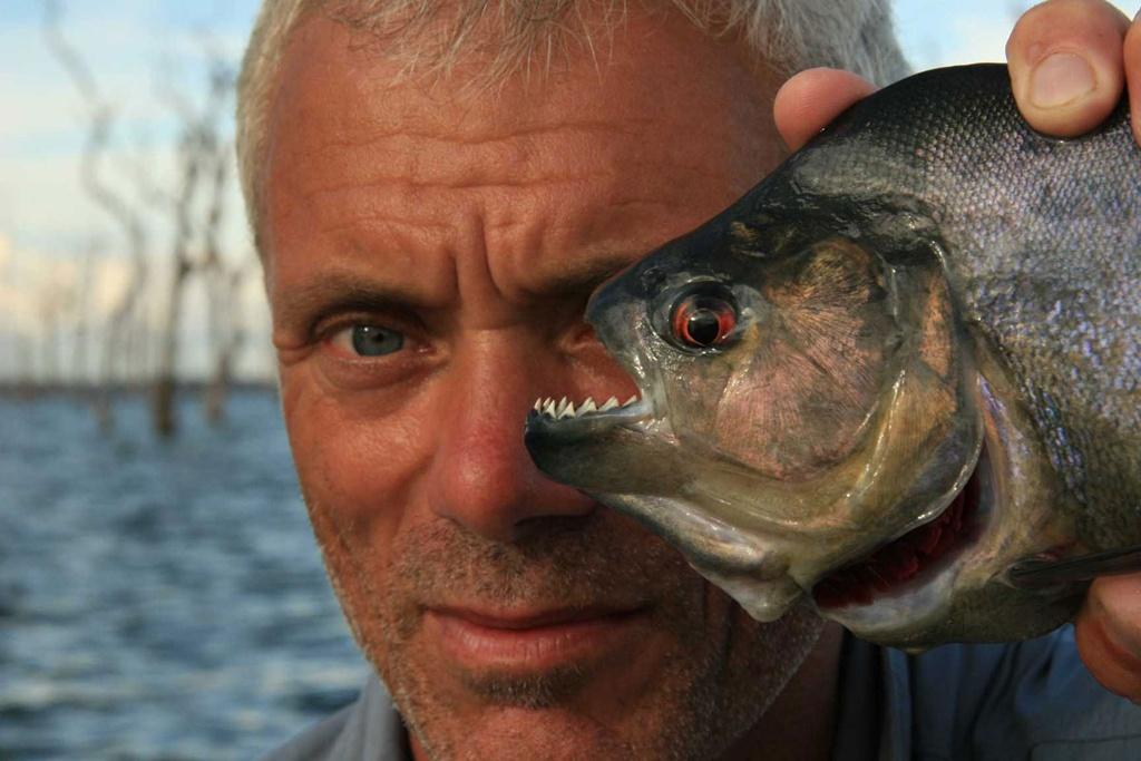Wade cầm một con piranha đen - loài lớn nhất trong số 40 loài piranha. Loài cá này có răng hình tam giác bén ngọt như lưỡi dao lam, có khả năng xé thịt con mồi chỉ trong nháy mắt.