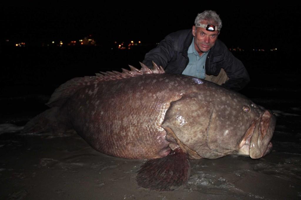 Jeremy Wade và một con cá mú đồ sộ ông vừa bắt được ở Queensland. Đây là một trong những con cá vĩ đại nhất mà ông từng tóm được. Loài cá mú khổng lồ này là loài cá có khung xương lớn nhất, sống trong rạn san hô, đặc biệt trên người nó có rất nhiều gai độc nguy hiểm.