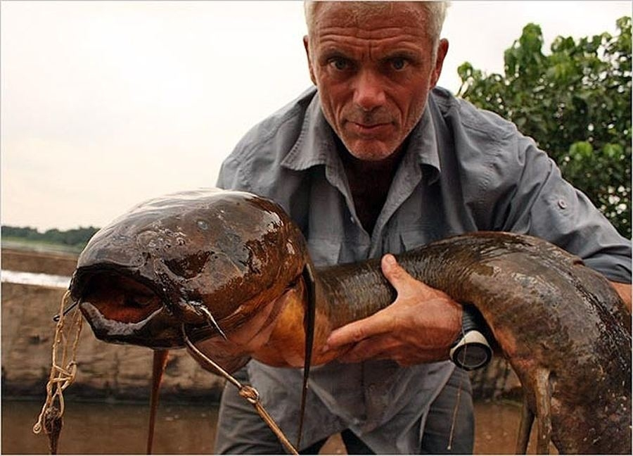 Tuy là một loài vô hại, nhưng hình thù của loài cá phổi châu Phi này cũng đủ làm người ta chết khiếp. Một con cá phổi trưởng thành có thể dài tới 2m. Những gã khổng lồ xấu xí này còn có một khả năng đặt biệt là có thể thích ứng được với môi trường khô cạn và hít thở không khí nhờ vào một phần của ruột có vai trò như lá phổi.