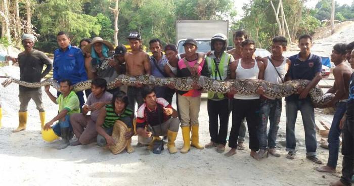 Người dân Malaysia chụp ảnh cùng với con trăn khổng lồ.