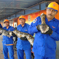 Phát hiện trăn khổng lồ dài nhất thế giới ở Malaysia
