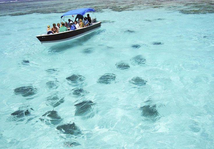 Những con cá mập và cá đuối tập trung lại khi phát hiện tàu chở khách du lịch.