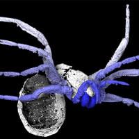 Phát hiện hóa thạch nhện 305 triệu năm tuổi