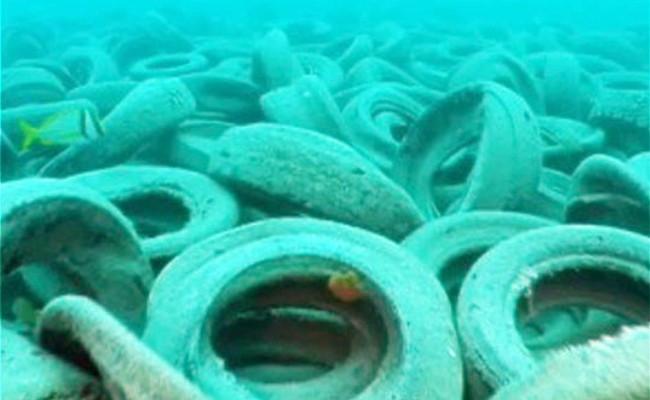 Số lượng hàu và cá tiếp cận lốp xe không được như kỳ vọng.