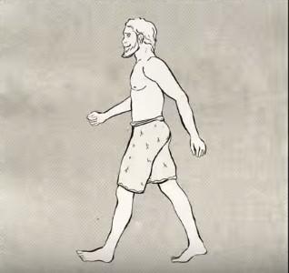 Hình ảnh sinh động, rõ nét về quá trình tiến hóa của loài người.