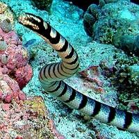 Những loài rắn độc nhất thế giới