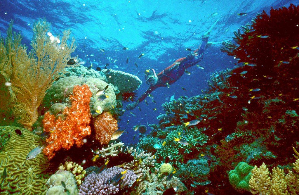 Lặn ở vùng biển Coral trong xanh ở Úc để xem những rặng san hô đẹp ngoạn mục.