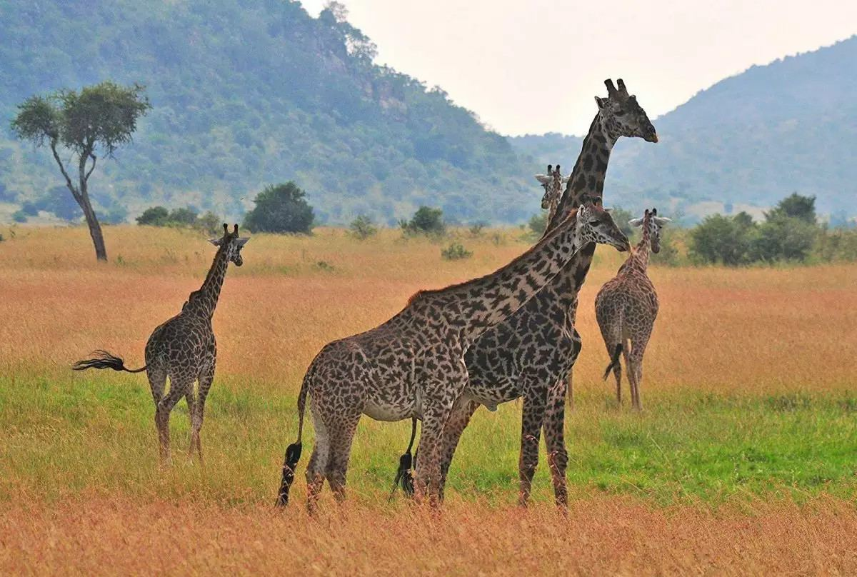 Quan sát động vật hoang dã trong môi trường sống tự nhiên của chúng trên một hành trình ở Kenya.
