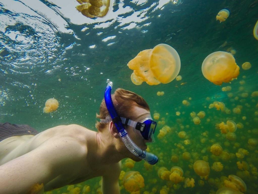 Bơi cùng hàng nghìn con sứa ở Hồ Sứa, đảo Eil Malk, Palau.