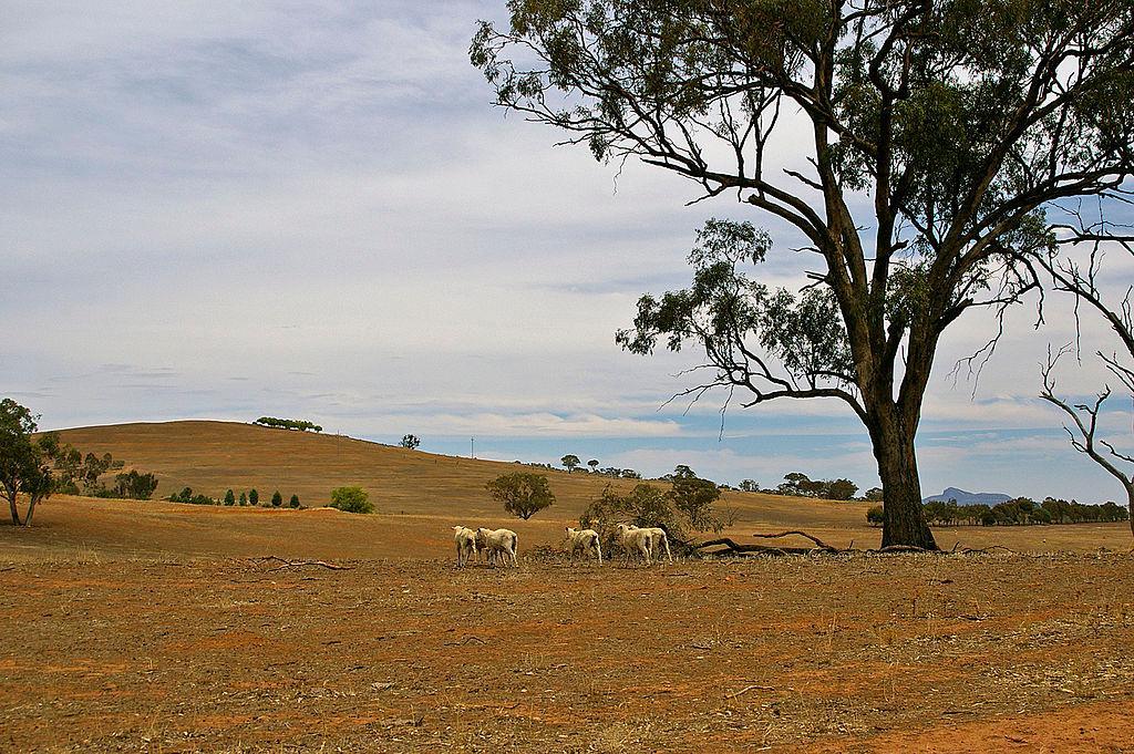 Hạn hán ở Úc, 1982-1983