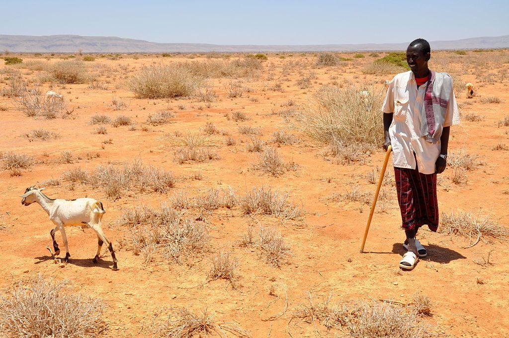 Hạn hán ở Đông Phi, 2011