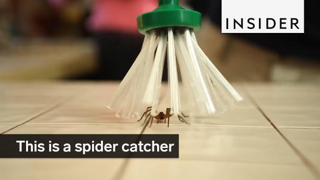 Cây bắt nhện My Critter Catcher.