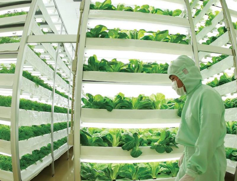 Nuvege là một trang trại dạng thẳng đứng trồng cây trong nước (hydroponic).