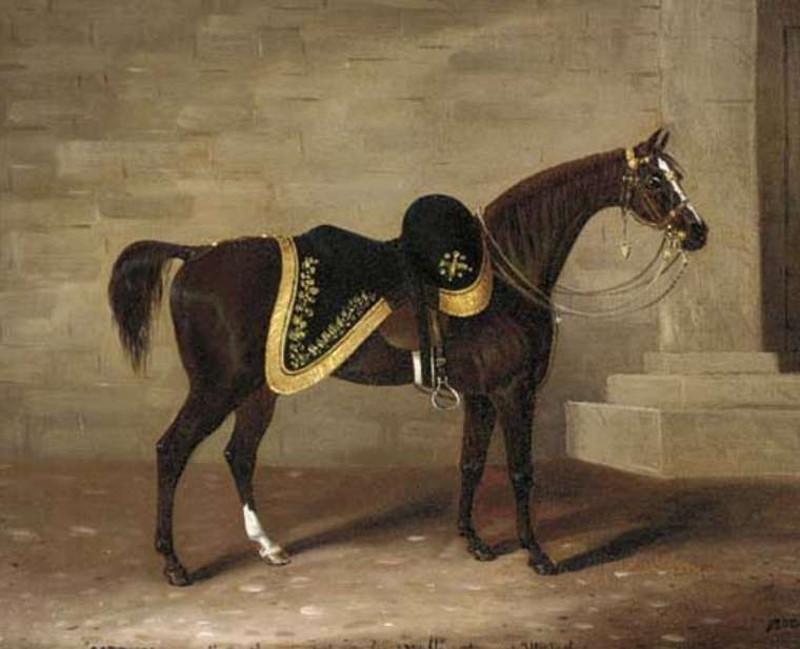 Copenhagen là chiến mã của Công tước Arthur Wellesley